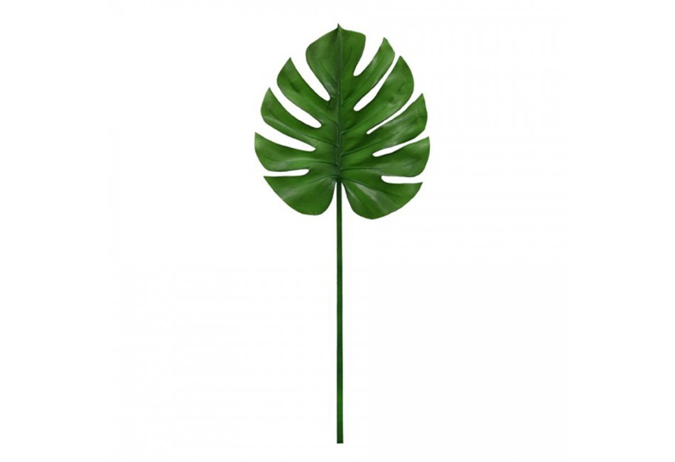TIGE DE MONSTERA